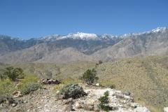 Araby-Palm Springs04