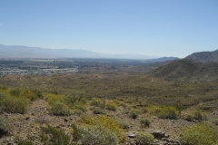 Araby-Palm Springs05