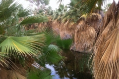CV-Preserve-Thousand-Palms-08