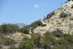 Horsethief Creek-Garner-06