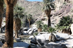 Indian Canyons-Palm Springs01
